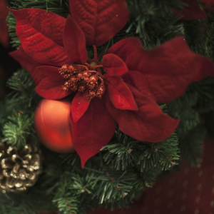 Christmas Savings Package – Save $150